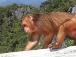 Monkeys on the Wat Tham Seua