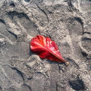 Black Sand Beach and a leaf