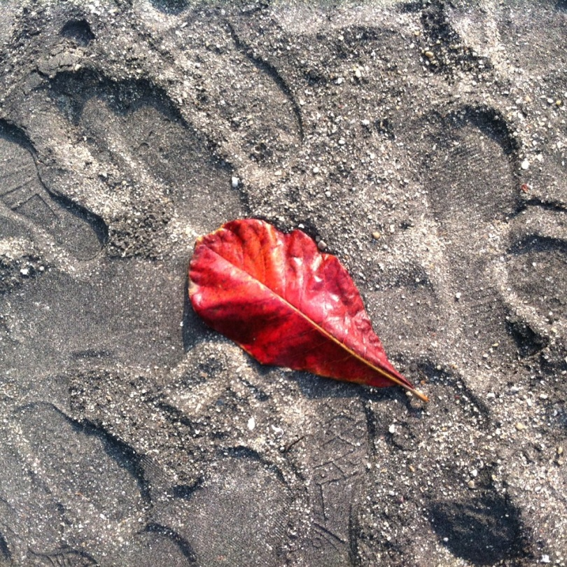 Black Sand Beach and a leaf