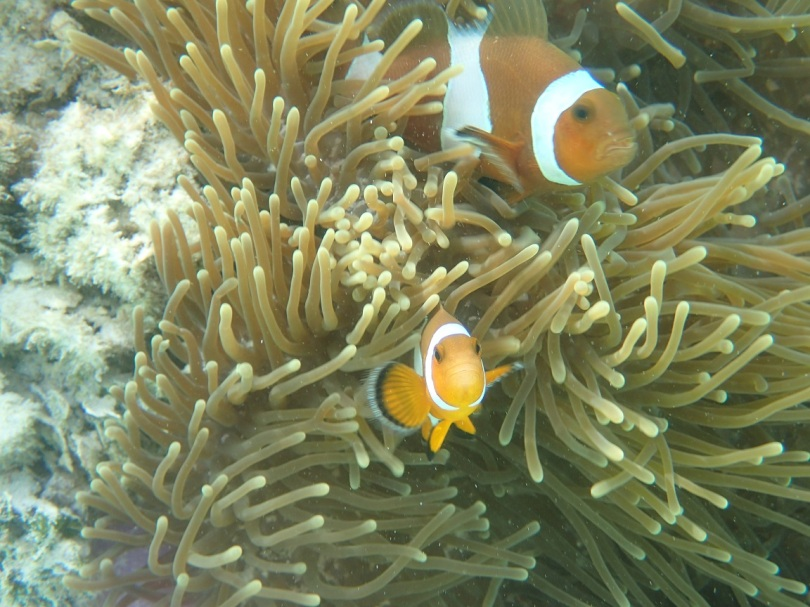 Nemo and Marlin off Koh Lipe