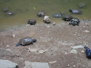 Turtles by the Kek Lok Tong temple