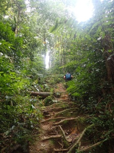 Trekking in the Malaysian highlands