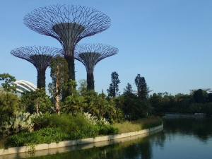 Super trees in Marina Bay Gardens