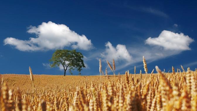 Harvest – Jim Crace – [Book Review]