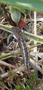 Lizard on Bokor Hill