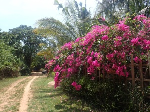 Blossoms at Kep National Park