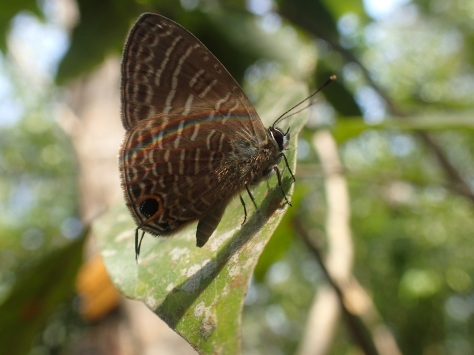 Insect in Kep National Park