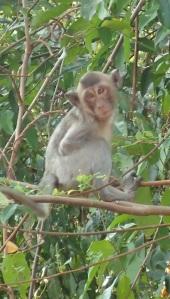 Kep monkey