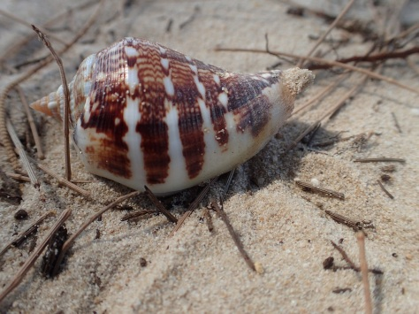 Shell on Otres Beach