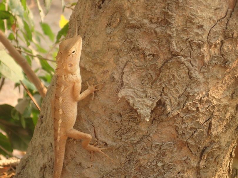 Lizard in the Killing Fields