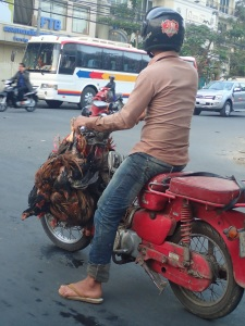 Chicken man in traffic