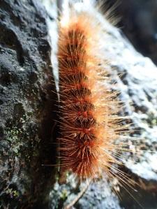 Frightening larvae in Vietnam