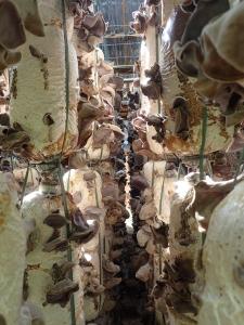 Mushroom farm in Dalat