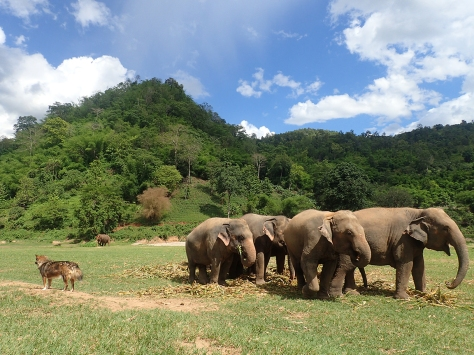 Thai elephant camp near Chiang Mai