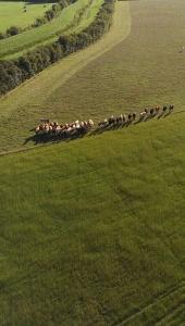 Curious Cambridge cattle